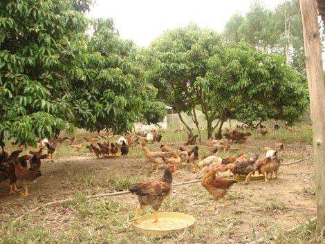 Bắc Giang: nhiều nhiệm vụ KH&CN đóng góp tích cực cho phát triển nông nghiệp