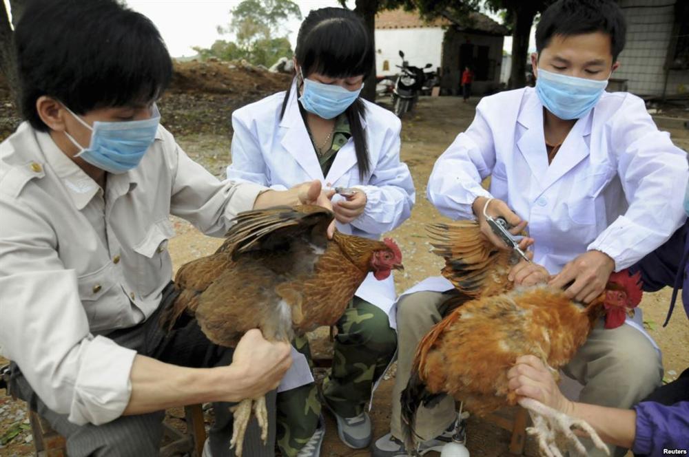 Phòng, chống virut cúm A/H7N9 và các chủng virut cúm gia cầm
