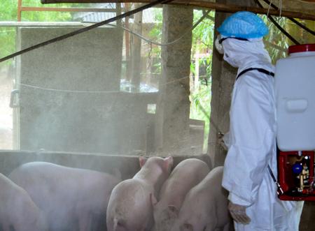 Hướng dẫn kỹ thuật phun khử trùng tiêu độc môi trường chăn nuôi