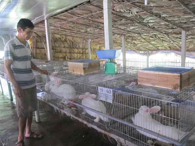 Làm giàu từ nghề nuôi thỏ lai nhập ngoại tại Vĩnh Phúc