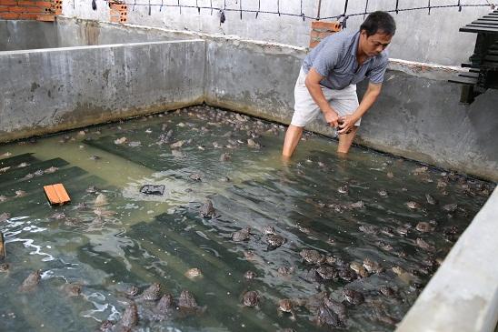Kỹ thuật nuôi ếch Thái trong bể xi măng