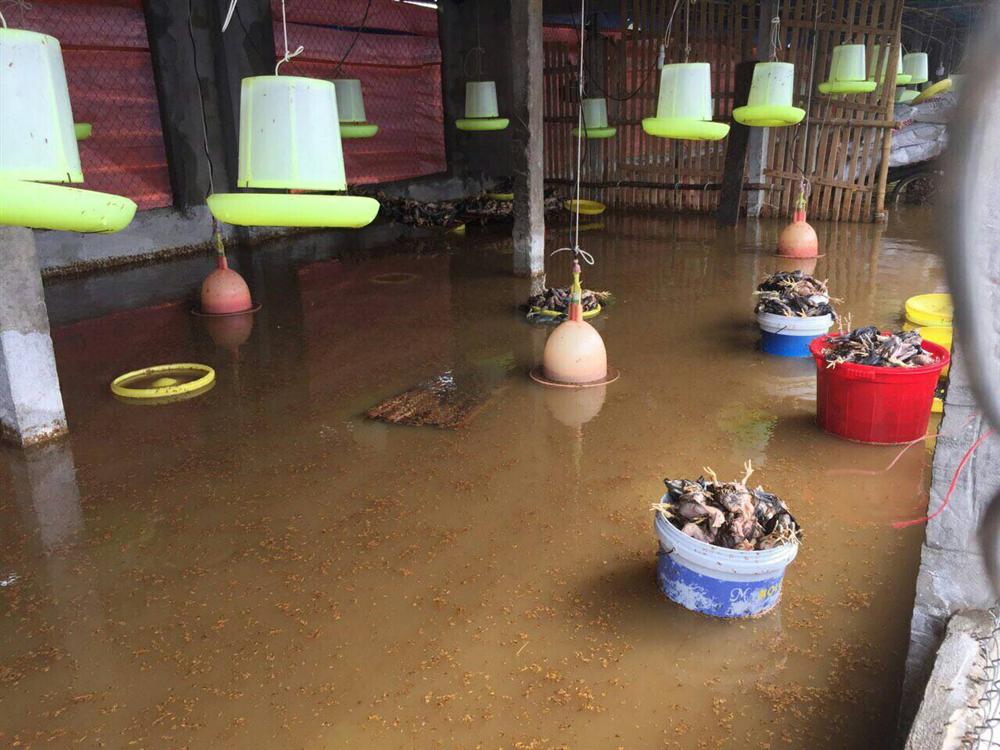 Chủ động phòng, chống dịch bệnh cho đàn vật nuôi sau mưa, lụt