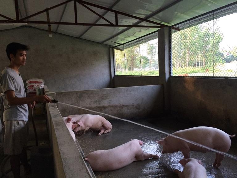 Phòng chống nắng nóng và dịch bệnh cho đàn vật nuôi