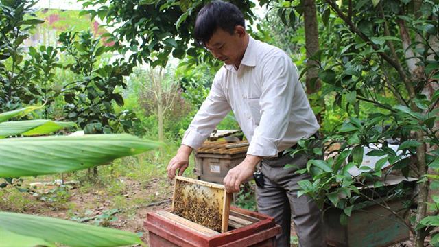 Nuôi ong VietGAP, mỗi năm thu hơn 2 nghìn lít mật sạch