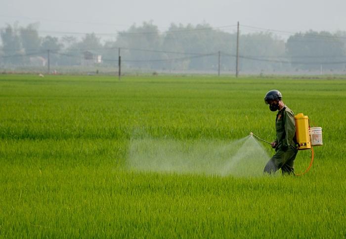 Tăng cường phòng chống bệnh đạo ôn gây hại lúa Đông xuân năm 2018