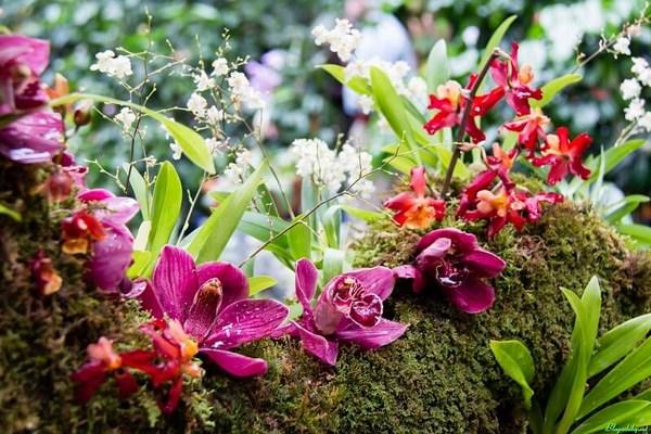 Các yếu tố ảnh hưởng đến sinh trưởng của cây lan