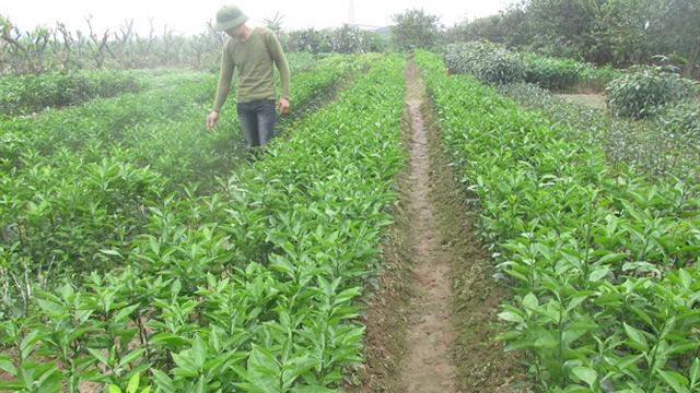 Nhân giống cây ăn quả đặc sản các loại, thu 800 triệu đồng/năm