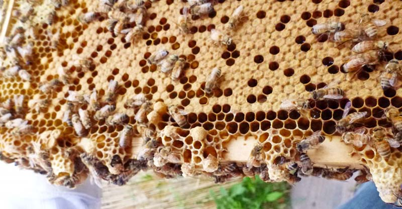 Ong bốc bay và biện pháp xử lý