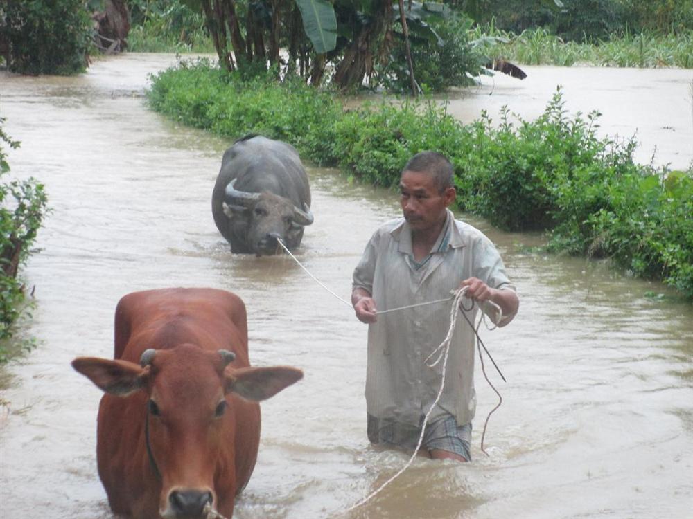 Chăm sóc và phòng bệnh cho gia súc, gia cầm trước, trong và sau  mùa mưa bão