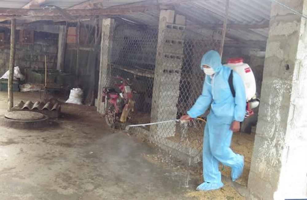 Hướng dẫn vệ sinh, khử trùng và tiêu độc để phòng chống  bệnh Dịch tả lợn châu Phi