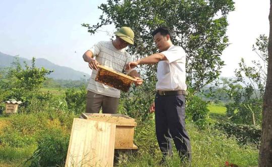 Nuôi ong du mục lãi trên 350 triệu đồng/năm