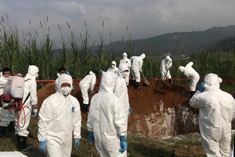 Kỹ thuật tiêu hủy, giết mổ bắt buộc động vật mắc bệnh và sản phẩm của động vật mắc bệnh