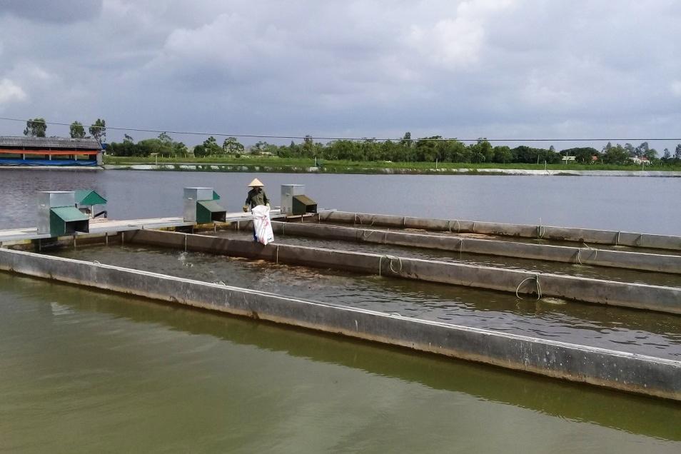 """Hướng dẫn kỹ thuật nuôi cá theo hình thức """"sông trong ao"""""""