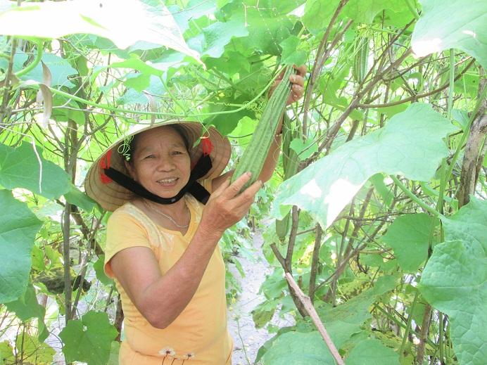 Thu nhập trên 15 triệu đồng/vụ nhờ trồng mướp khía