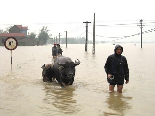 Các giải pháp kỹ thuật bảo vệ đàn gia súc, gia cầm trong mùa mưa bão