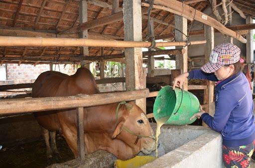 Các biện pháp phòng chống thiếu nước cho đàn vật nuôi