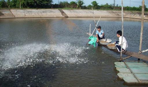 Một số lưu ý trong chăm sóc cá mùa nắng nóng