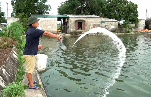 Chăm sóc cá nước ngọt mùa mưa bão
