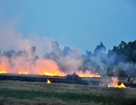 Không đốt rơm, rạ sau khi thu hoạch lúa