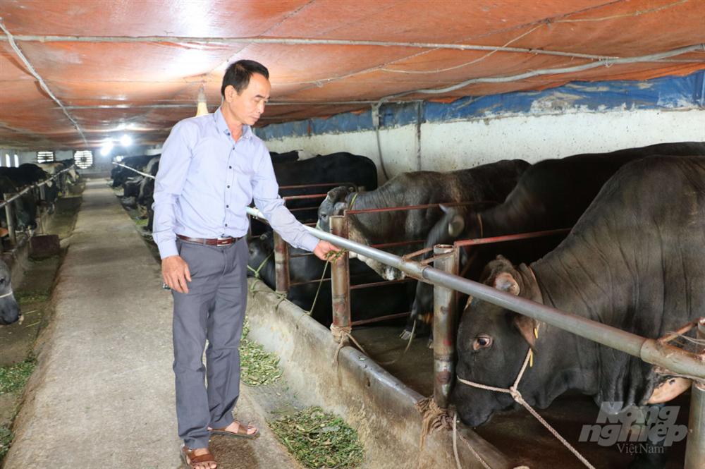 Kỹ thuật làm đệm lót sinh học cho bò nuôi thịt, vỗ béo đảm bảo  vệ sinh môi trường