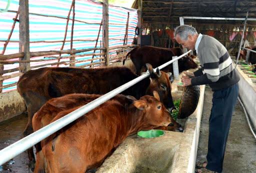 Phòng chống đói, rét cho vật nuôi trong mùa Đông