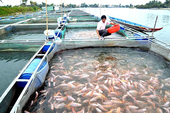 Kỹ thuật quản lý chăm sóc cá lồng bè
