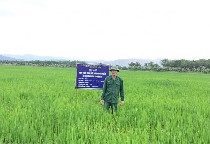 Nuôi rươi kết hợp trồng lúa hữu cơ mang lại hiệu quả cao