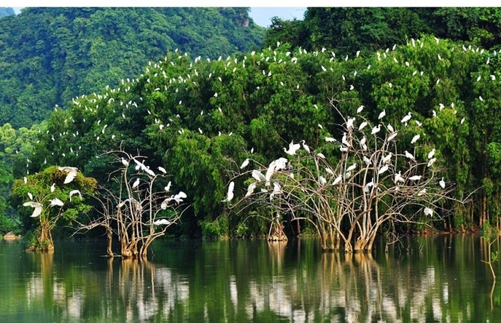 Đặc sản của rừng ngập mặn ven biển