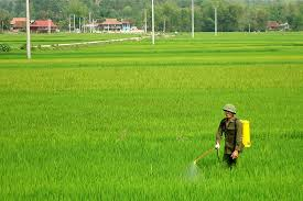 Một số biện pháp hạn chế hiện tượng lúa cỏ trong vụ mùa 2021