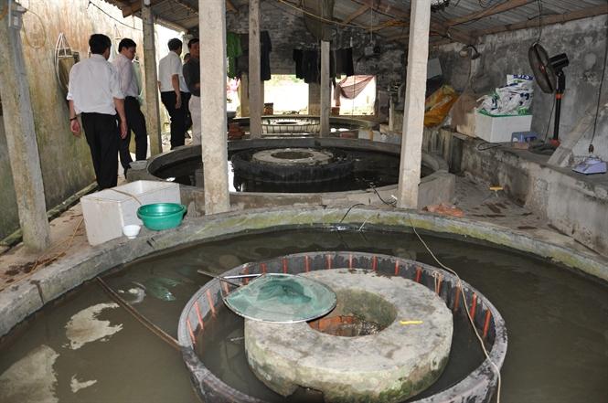 Làng nghề cá giống Hội Am (huyện Vĩnh Bảo): Khó khăn vẫn quyết giữ nghề truyền thống