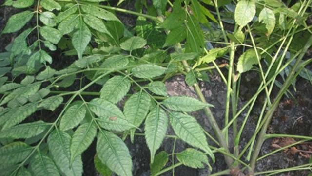 Phương pháp tự chế thuốc trừ sâu sinh học góp phần bảo vệ môi trường và nâng cao chất lượng nông sản