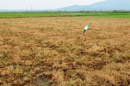 Những nguy hại khôn lường khi lạm dụng thuốc diệt cỏ