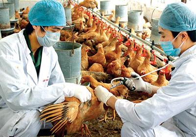 Những điều cần biết về vắc-xin và sử dụng vắc-xin cho vật nuôi