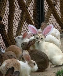 Những bệnh thường gặp khi nuôi thỏ
