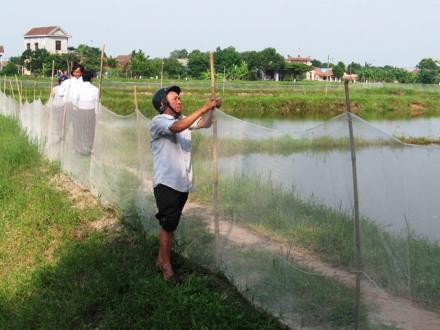 Chăm sóc, bảo vệ thuỷ sản trong mùa mưa bão