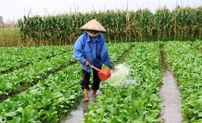 Một số lưu ý khi gieo trồng nhóm cây ưa lạnh ở vụ Đông